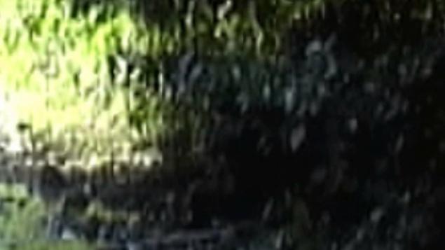 Видео Йети убивающего оленя