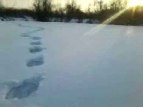 Дети встретили Снежного человека (16+)