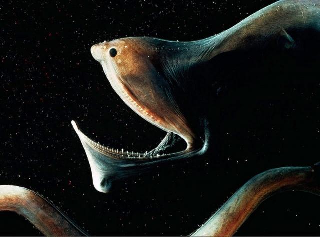 Секреты Океана - Чудовища из Бездны. Фантастические Истории.