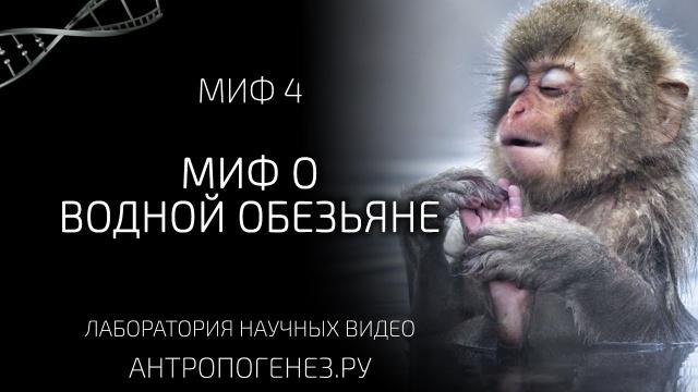 Миф о водной обезьяне. Мифы об эволюции человека