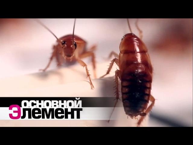 Домашние паразиты. Основной элемент
