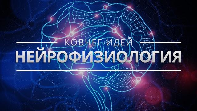 Самые важные идеи о мозге. Ковчег идей