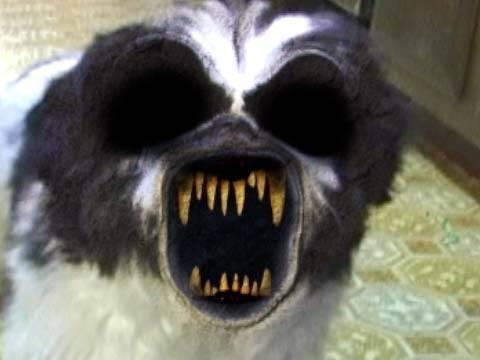 Собаки видят полтергейст
