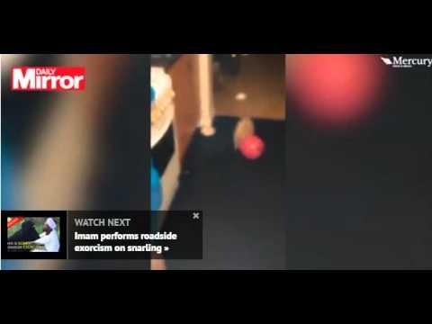 Видео с призраком собаки