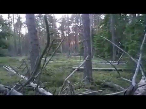 Видео монстра в лесу