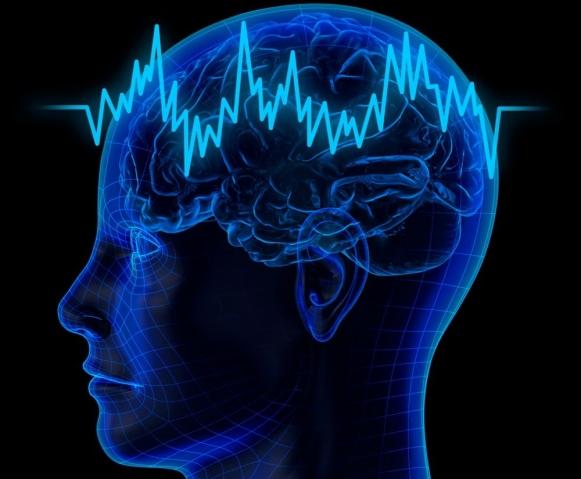 Наш мозг: факты и мифы