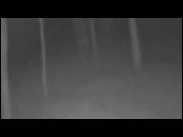Привидения в лесу