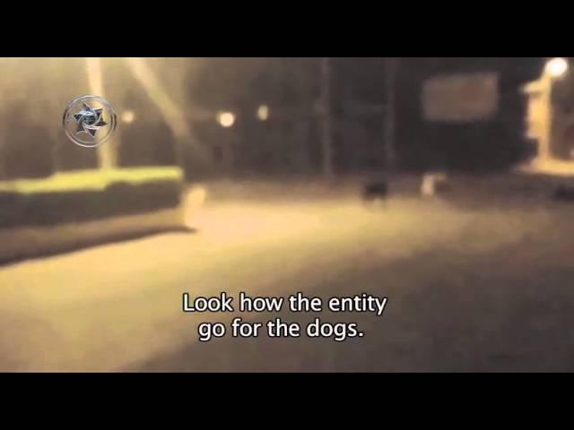 Уличные псы в Руанде испугались призрака