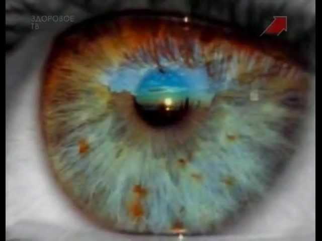 Тело человека. Глаз. Зрение.