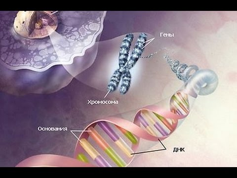 Генетический код взломан! Новые тайны генетики