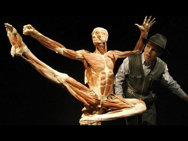 Discovery. Атлас тела. Мышцы и кости