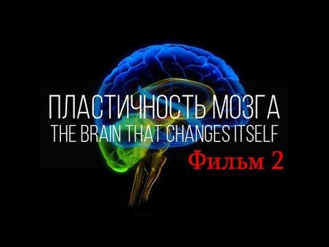 Как поменять мозг (Нейропластичность Мозга)