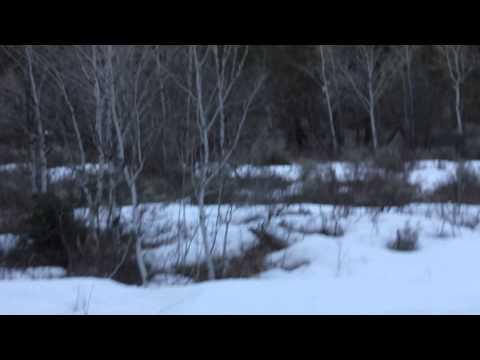 Видео со снежным человеком