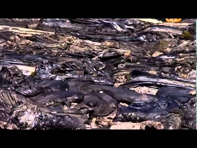 Лагерь смерти Треблинка.  Рассказ выживших. BBC