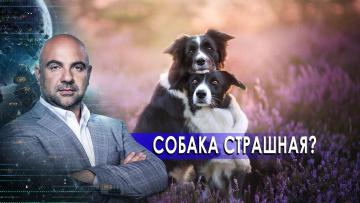 """Собаки страшные? «Как устроен мир"""" с Тимофеем Баженовым (14.10.2020)"""