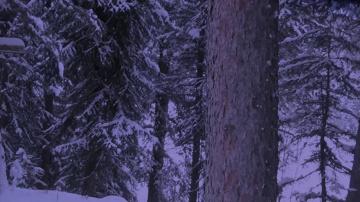 Охотник встретил Снежного человека в лесах Канады