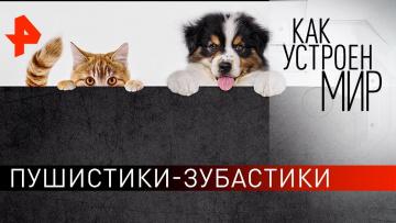 """Пушистики-зубастики. """"Как устроен мир"""" с Тимофеем Баженовым (26.02.2020)"""