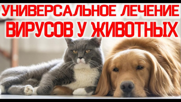 Универсальное Лечение Вирусов у Животных