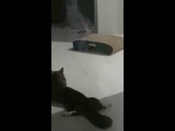 Призрак кошки
