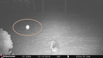 Плазмоид напугал дикого лиса
