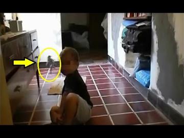 Гном попал на видео