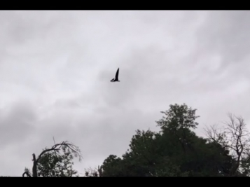 Птеродактиль над Айдахо видео