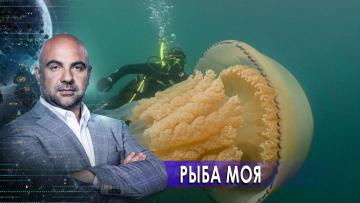 """Рыба моя. «Как устроен мир"""" с Тимофеем Баженовым (02.12.2020)"""