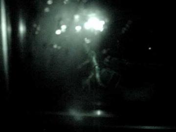 Фермеры из окна собственного дома сняли инопланетянина