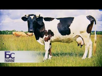 Правда о молоке. Большой скачок
