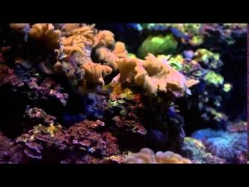 Происхождение океанов