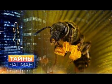 Цивилизация насекомых. Тайны Чапман