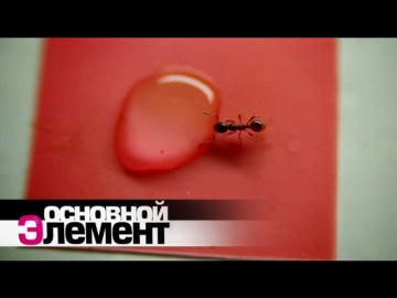 Мир муравьев. Основной элемент