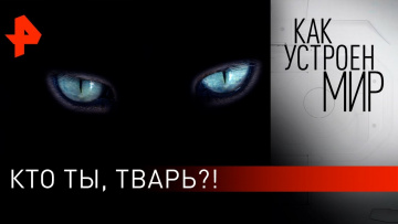 """Кто ты, тварь?! """"Как устроен мир"""" с Тимофеем Баженовым (14.10.2019)"""