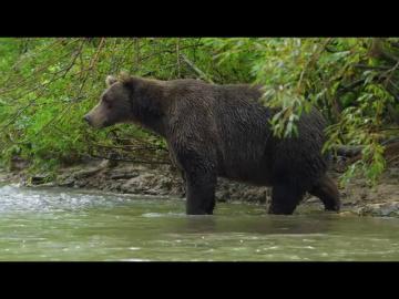 Документальный фильм про животных. Хищники России