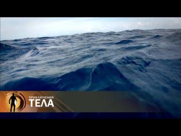 Морская болезнь. Приключения тела