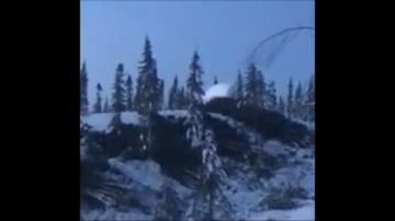 Засняли как огромный йети вырывает деревья