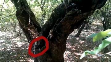 Странное существо спряталось в дупле дерева