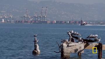 Затонувший город пиратов. Осушить океан. National Geographic