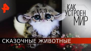"""Сказочные животные. «Как устроен мир"""" с Тимофеем Баженовым (28.05.20)"""