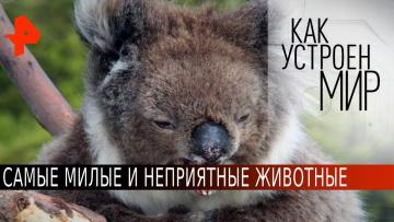 Самые милые и неприятные животные. Как устроен мир с Тимофеем Баженовым (17.06.2020)