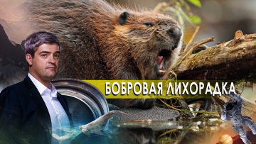 Бобровая лихорадка. НИИ РЕН ТВ (08.10.2020)