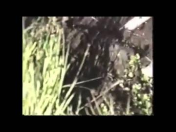 Видео снежного человека попало на видео 2