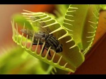 Дикая природа. Растения питающиеся животными! Документальный фильм