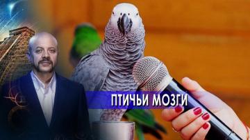 Птичьи мозги. Загадки человечества с Олегом Шишкиным (09.06.2021)