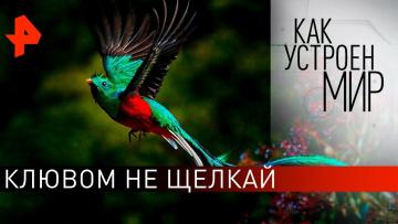 """Клювом не щелкай. «Как устроен мир"""" с Тимофеем Баженовым (05.03.2020)"""