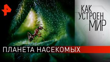 """Планета насекомых. """"Как устроен мир"""" с Тимофеем Баженовым (19.02.2020)"""