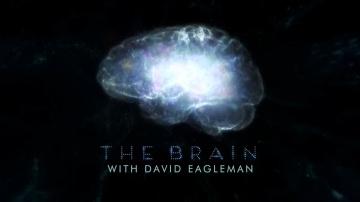 Мозг Человека. 3 серия