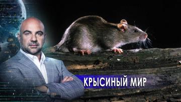 """Крысиный мир. «Как устроен мир"""" с Тимофеем Баженовым (20.02.2021)"""