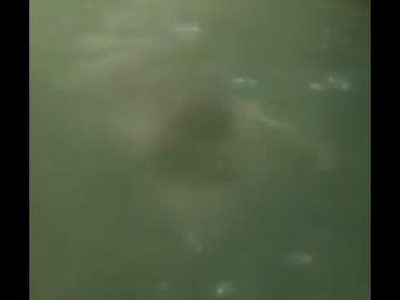 Что-то жуткое плавает по каналам реки Изабела