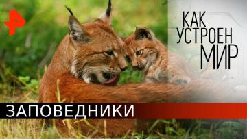 """Заповедники. «Как устроен мир"""" с Тимофеем Баженовым (21.05.2020)"""